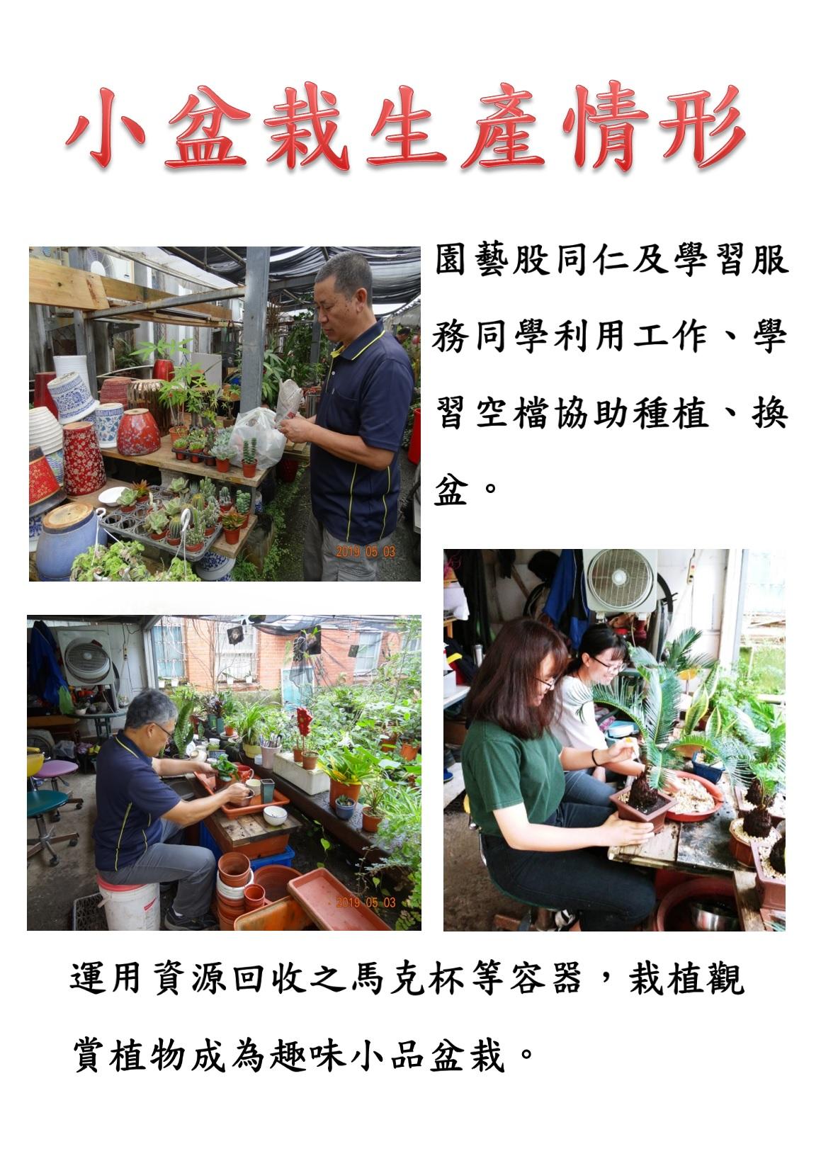 小盆栽生產介紹